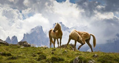 Dolomite-Horses