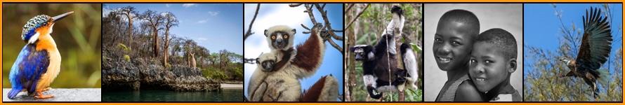 Madagascar-Tile-890-x-150-x-72